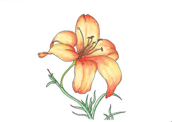 Dessin lys orang - Dessin fleur de lys royale ...